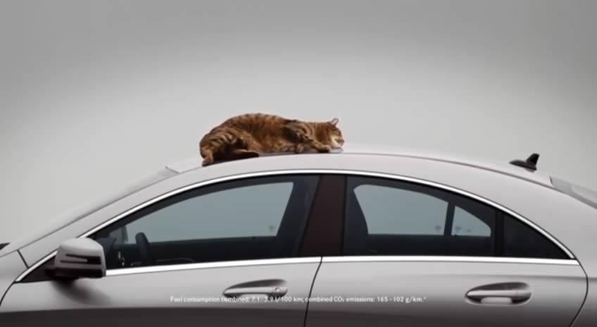 Mercedes-Benz CLA-Class Cat Video