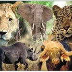 How Sourcing is Related to South Africa's Big Five