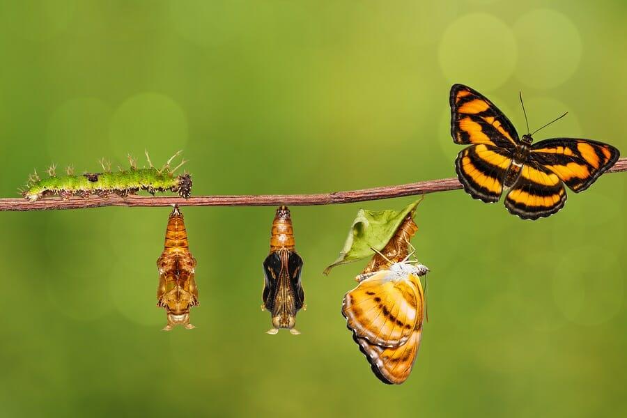 The Metamorphosis of Becoming Innovative – TLNT