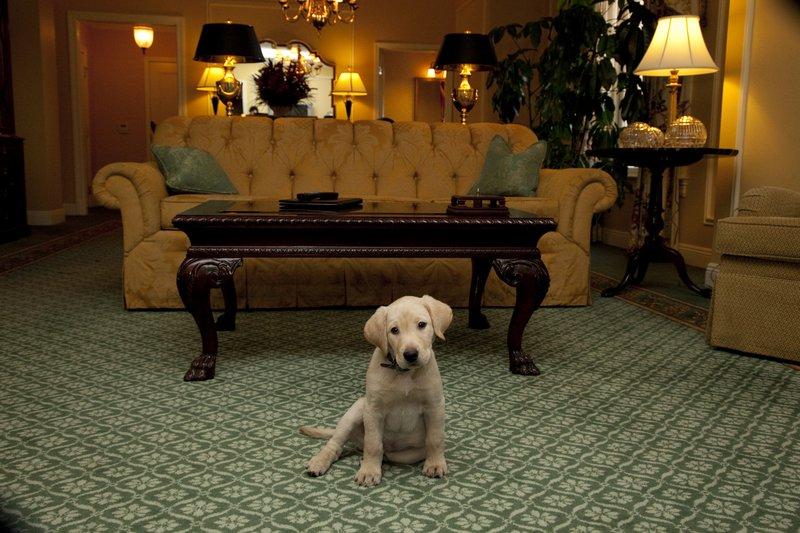 bnahh_69019829_puppy_in_the_prez.jpg