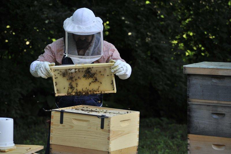hi_bnahh_tyler_with_bees_2.jpg
