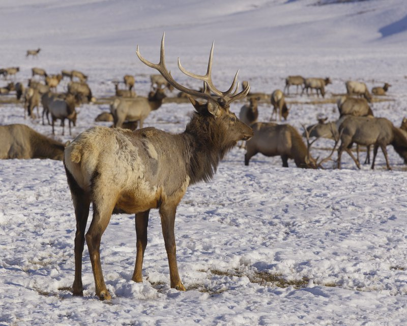 elks_high_res_7753.jpg