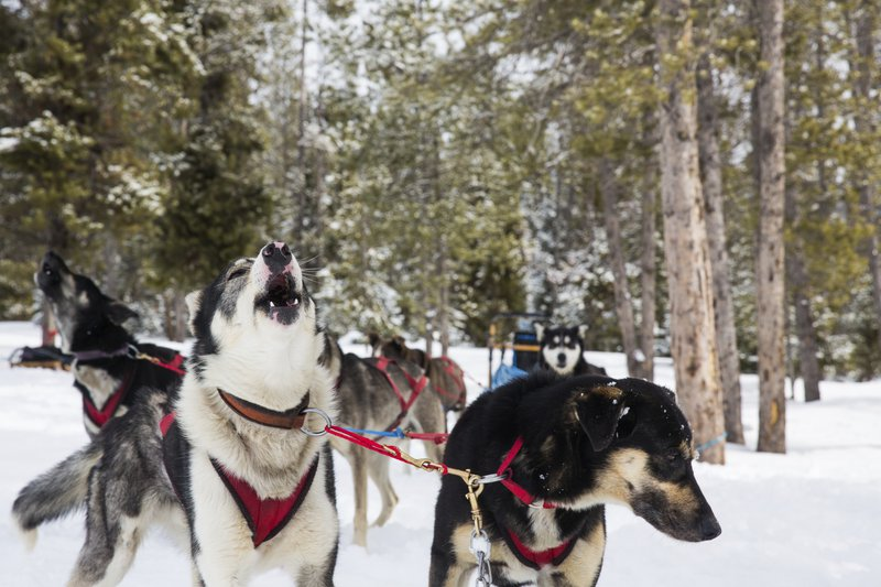 sled_dog_tour_high_res_4600.jpg