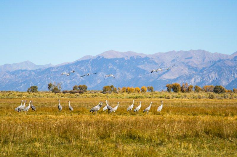 101215-maddie-zapata-wildlife-cranes.jpg