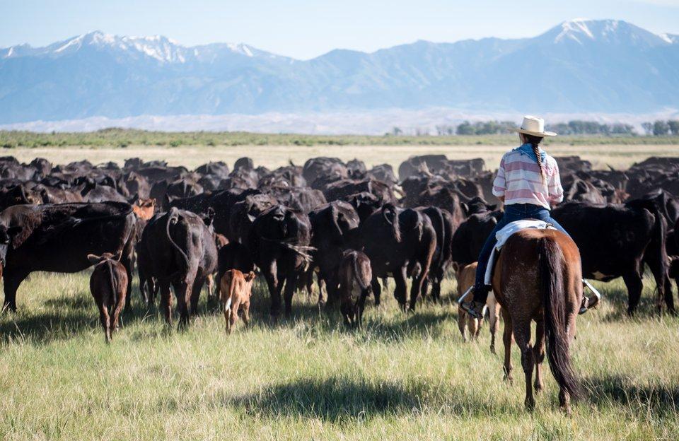 Zapata Ranch