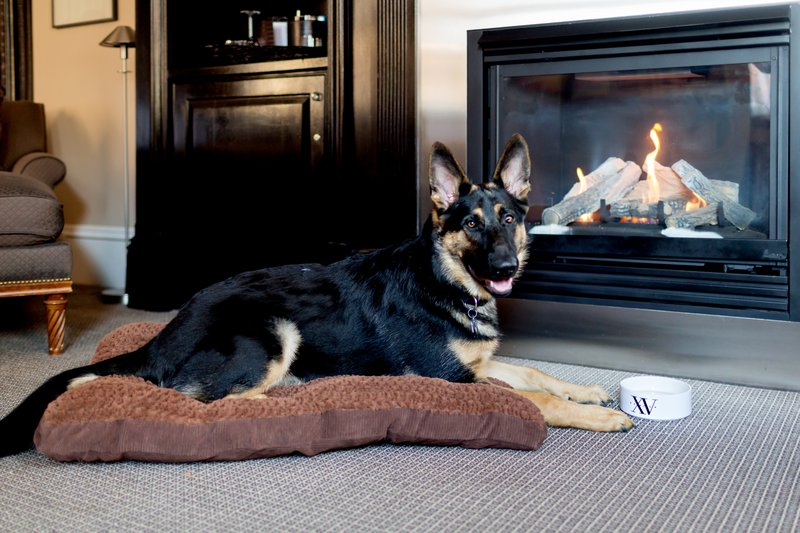 75572627-h1-dog_friendly.jpg