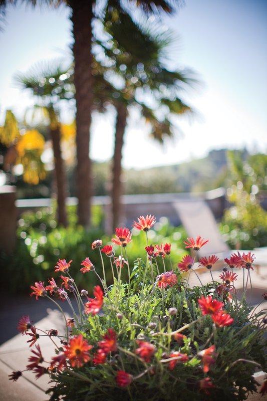 ventana_floral_pr_kg.jpg