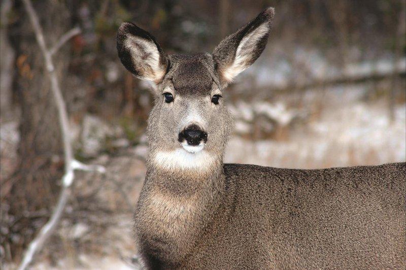 deer_479930_high.jpg