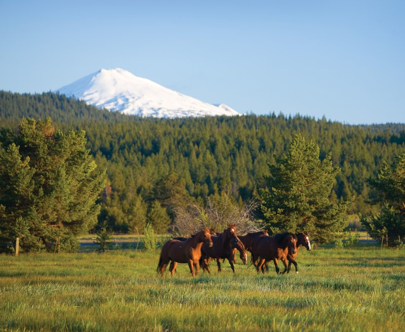 horses_in_field_mt_view_2.jpg