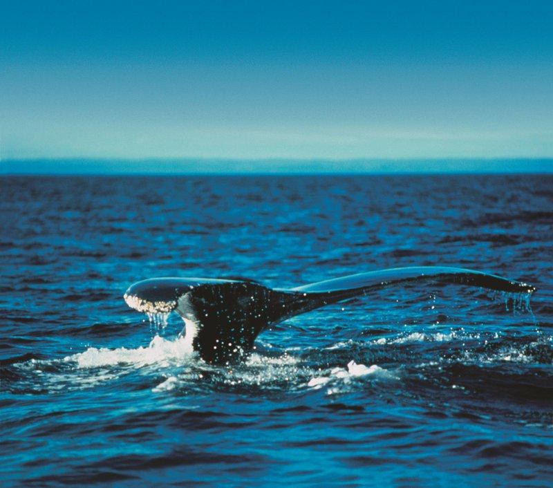 whale-watching_480386_high.jpg
