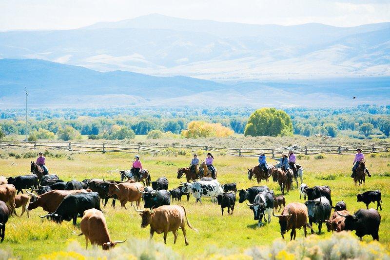 bcr_adventures_horseback_cattledrive.jpg