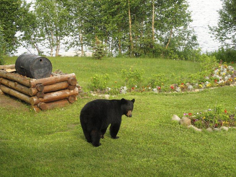 black_bear_on_the_grounds.jpg