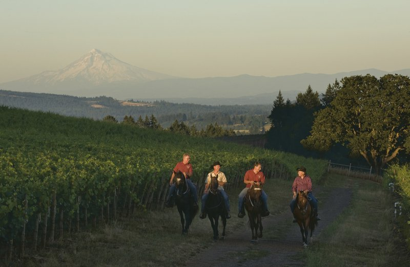 area_activities_-_equestrian_wine_tours.jpg