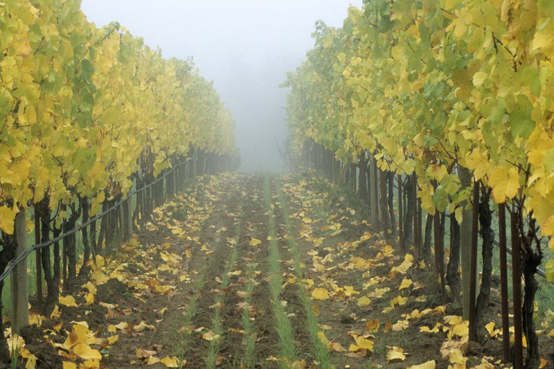 vineyard_path.jpg