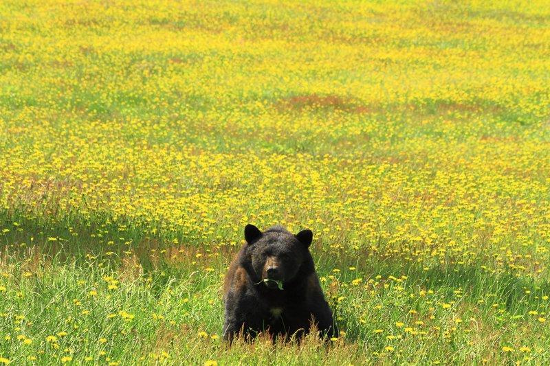 papa_bear.jpg