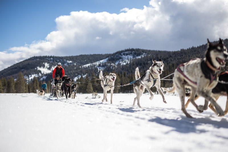 lmrwinter2016hddog_sleigh-4.jpg