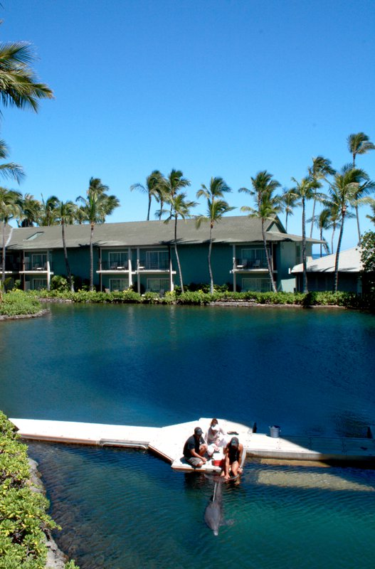 hi_lw2713_52382288_dolphin_lanai_view_vertical.png