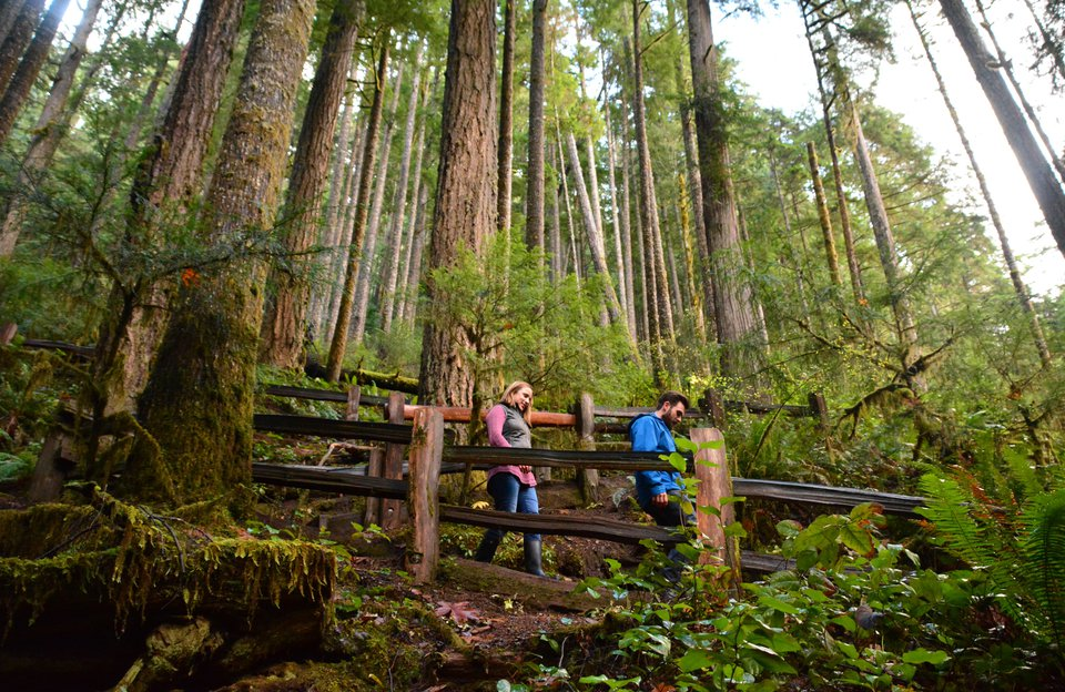 Day Trip to Olympic National Park from Seattle