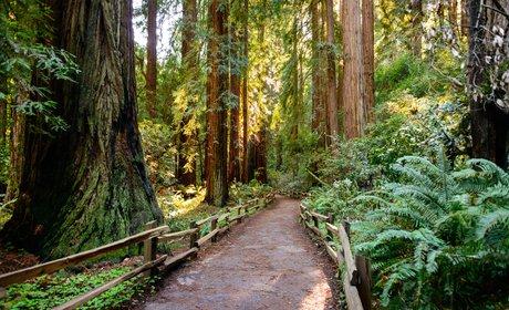 * Half-Day Muir Woods and Sausalito Tour