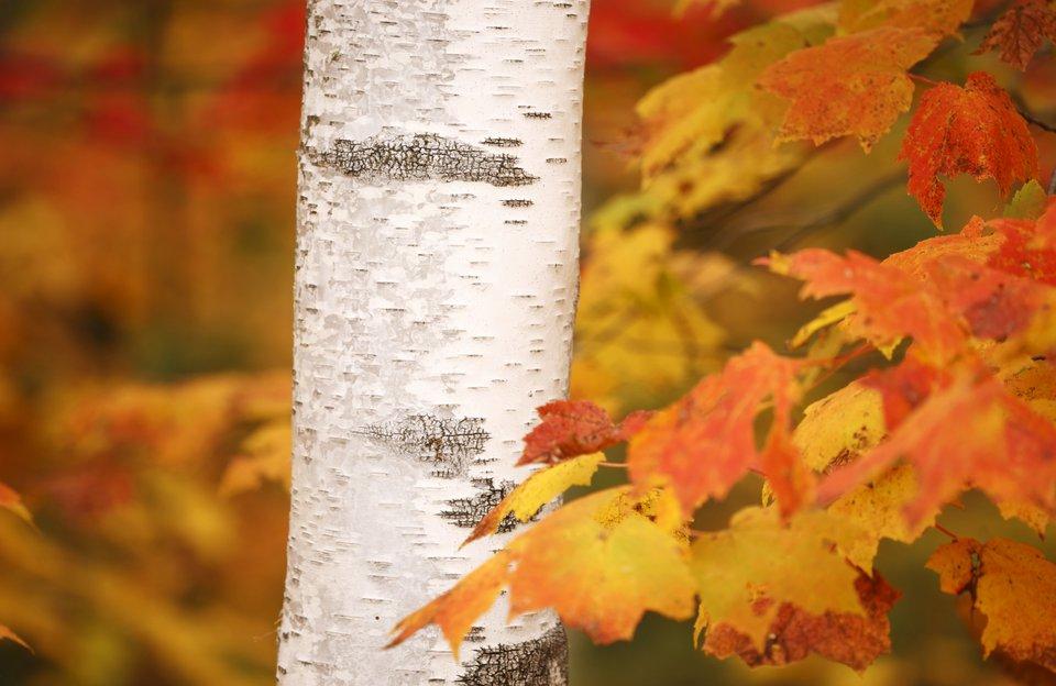 Peeping for Leaves