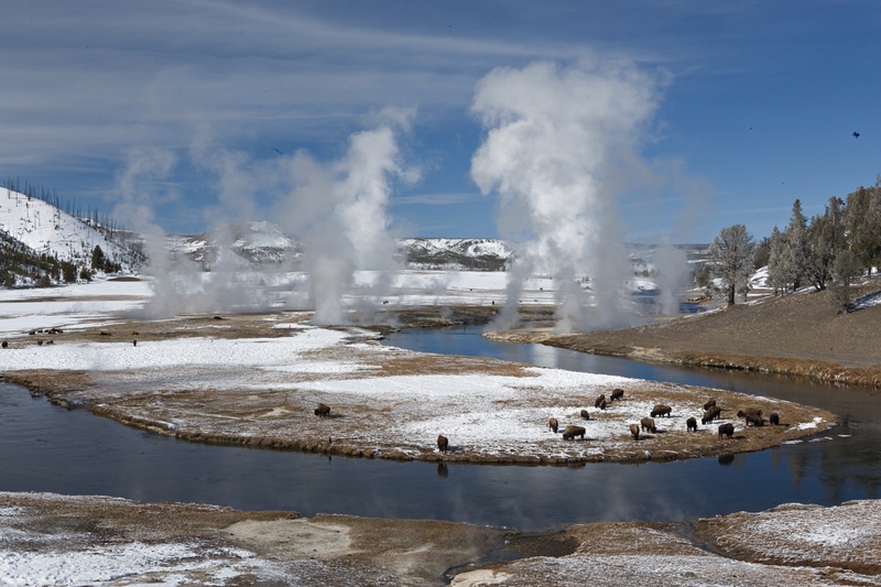 yellowstone-winter-bison-geysers.png