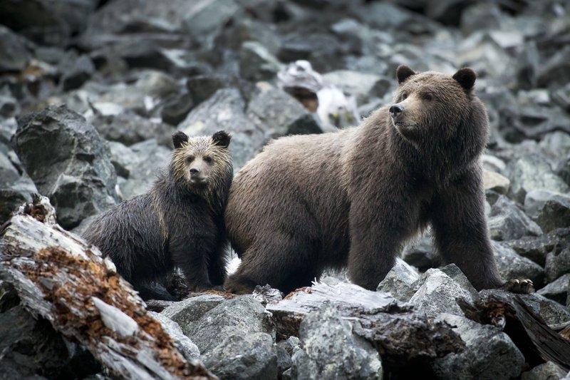 grizzly_mom_and_cub_photo_john_lehmann.jpg