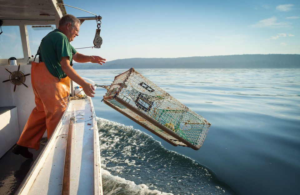 Lobster Catch and Dine Excursion