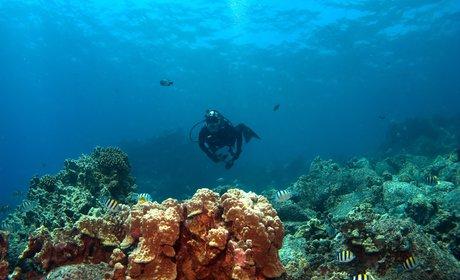 2-Tank Diving Charter Lanai
