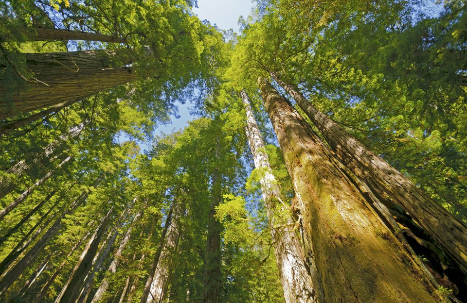 California Redwoods Canopy Zipline Private Tour