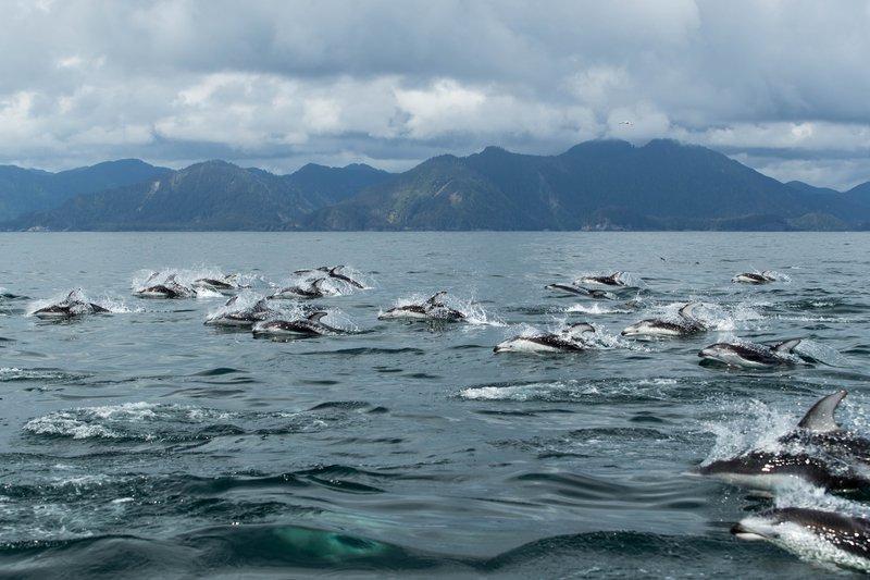 oceanhouse_-_dolphins.jpg