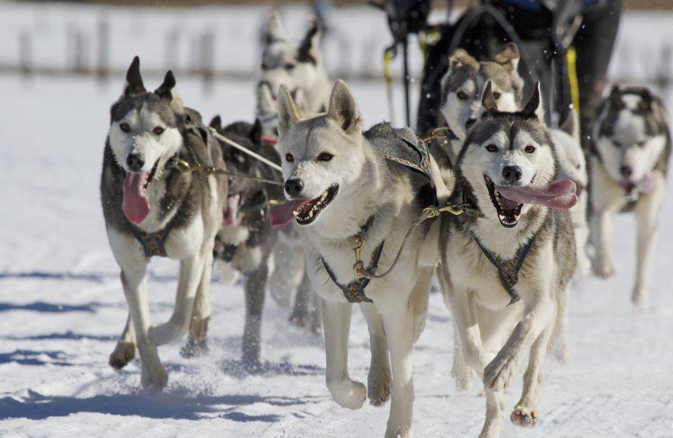 Winter Dog Sledding Adventure