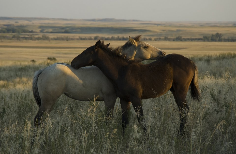 Wild Mustang Viewing Excursion