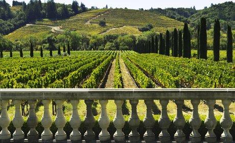 * Full-Day Sonoma Valley Wine Tour