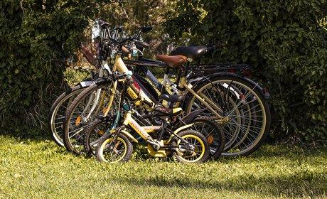 * Family-Friendly Yosemite Bike Tour