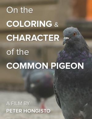 On the Coloring and Character of the Common Pigeon