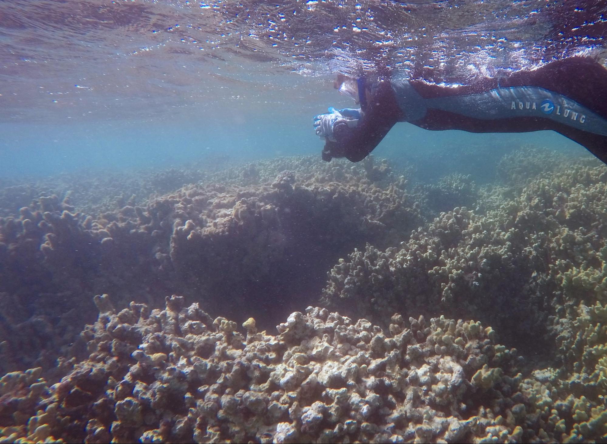Photo of diver taking photos of the reef.