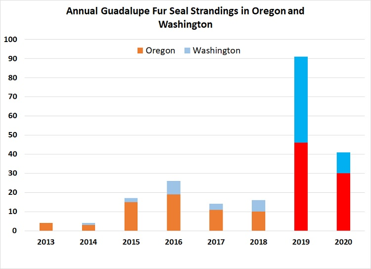 Graph of annual Guadalupe fur seals in Oregon and Washington