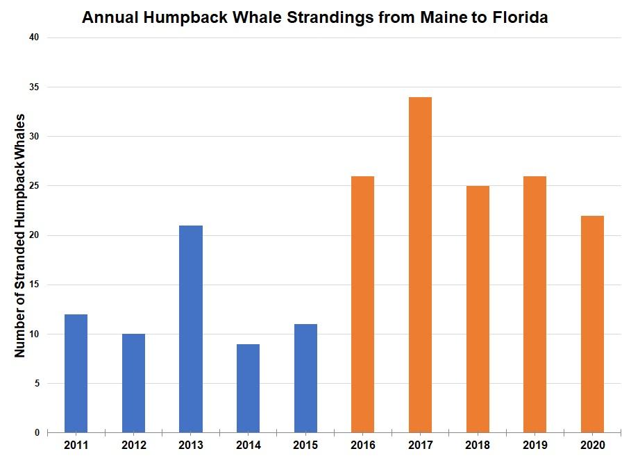 Humpback Whale Maine to Florida Strandings Chart
