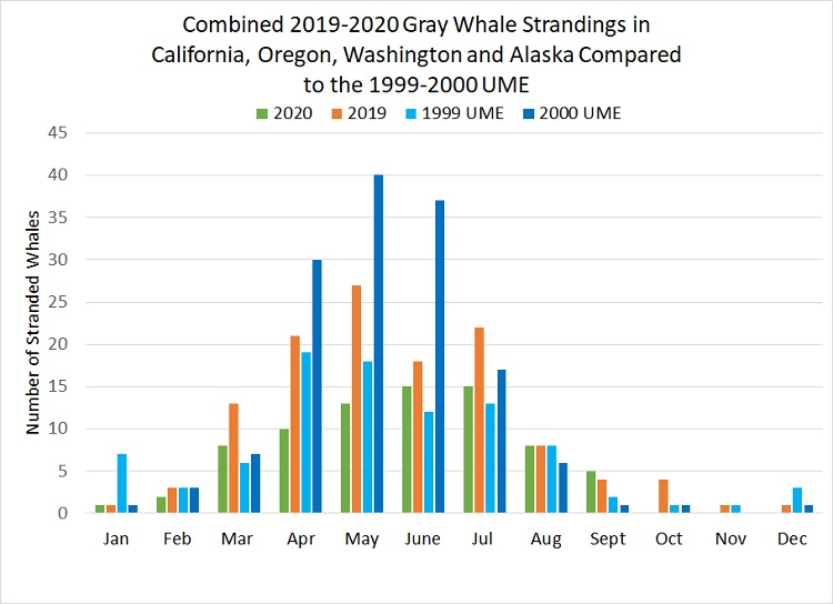 Combined Gray Whale Strandings Compared to 1999 UME