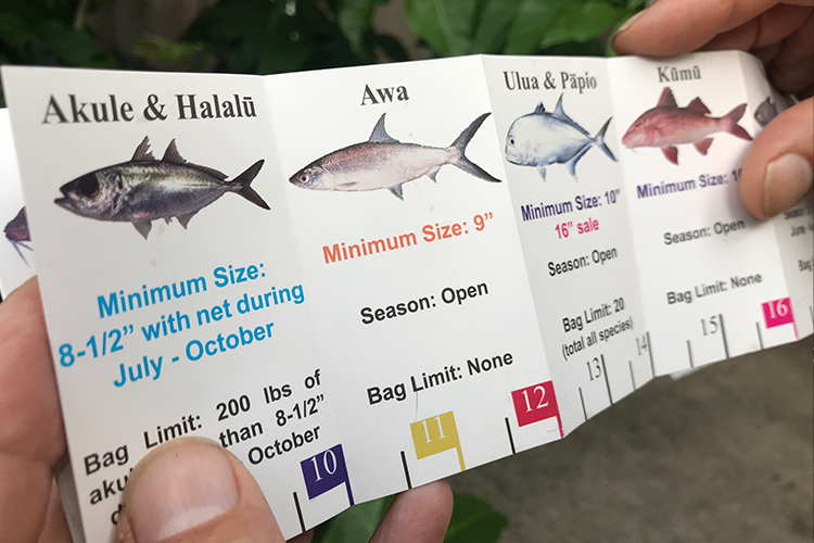 Hawaii fishing measurement guide.