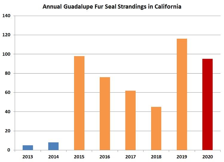 Graph of Guadalupe fur seal strandings in California