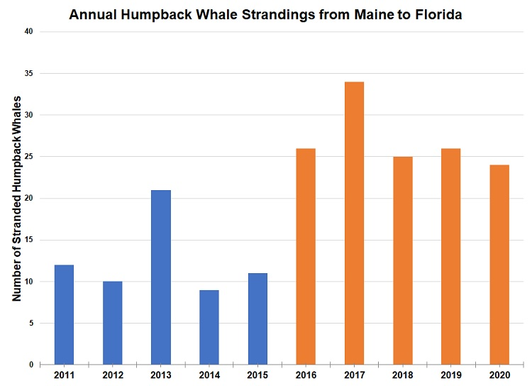 Annual humpback whale strandings from Maine to Florida.