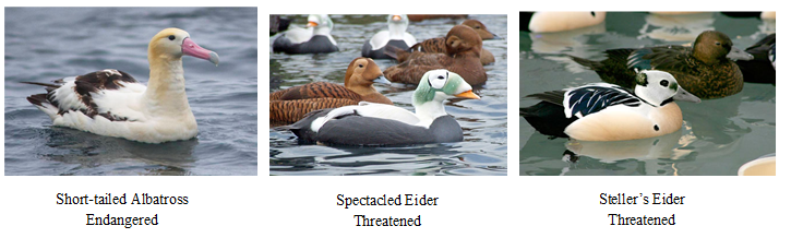 endangered and threatened seabirds of Alaska
