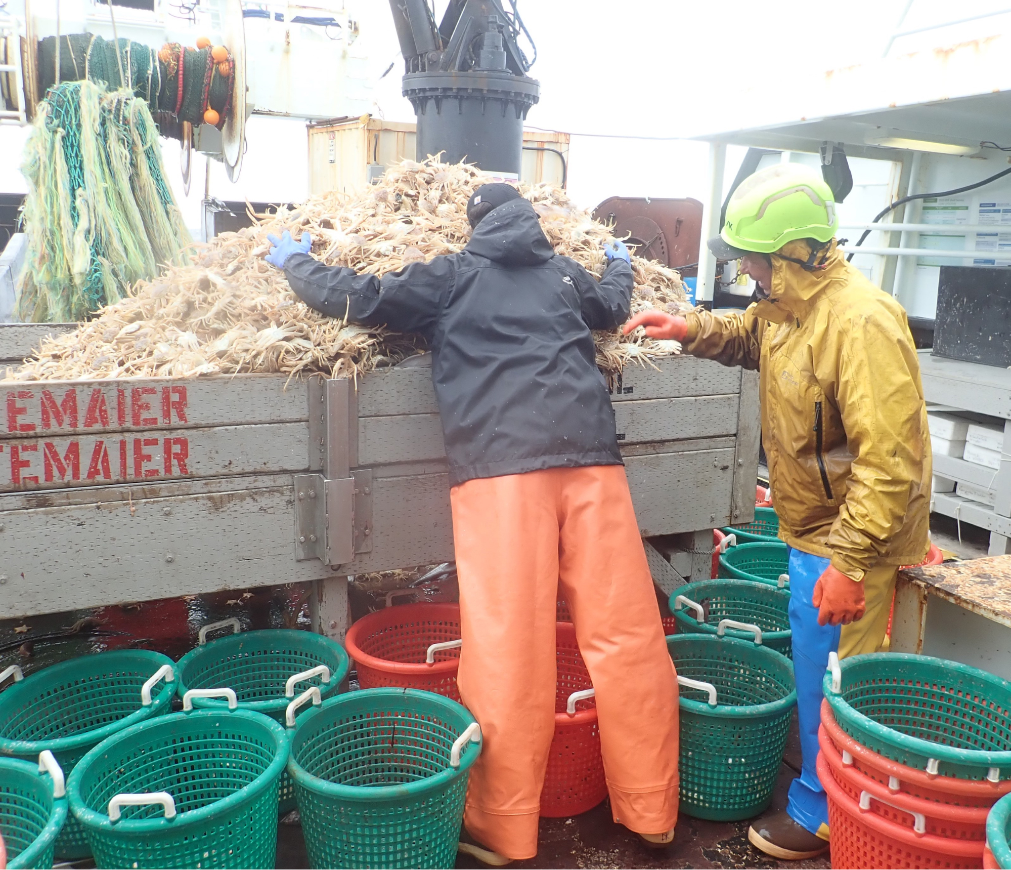 Photo of staff sizing up a catch of small and immature snow crab on a boat deck.