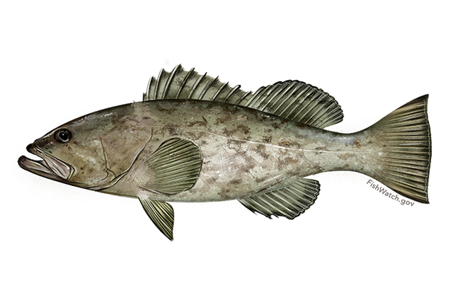 Image for Grouper