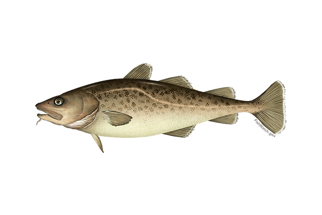 Image for Atlantic or Pacific Cod