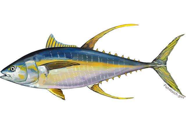 Image for Yellowfin