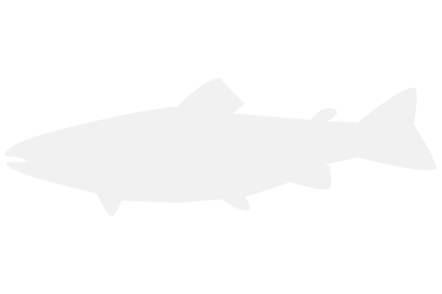 Image for Other Marine Species