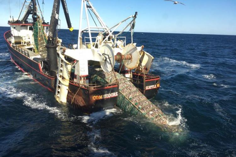 Photo of trawler F/V Commodore hauling in pollock catch in the Eastern Bering Sea.