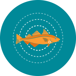The icon for fish livers shows the orange haddock illustration in the center of three concentric circles of white dotted lines to represent the overall health of a fish and a small circle under the gills to show the approximate location of the liver.